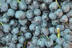 Blue grapes. Format filling blue ripe rapes Royalty Free Stock Image