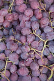 Blue grapes Royalty Free Stock Image