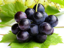 Free Blue Grapes Royalty Free Stock Images - 3042359