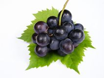 Blue grapes stock images
