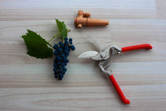 Blue grapes on beige floor with extended metal pruning shears Royalty Free Stock Photos