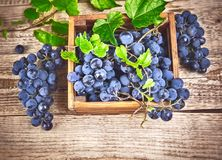 Blue grapes in box with willow and green leaf at old wooden board rustic style copyspace. Stock photo Stock Photography