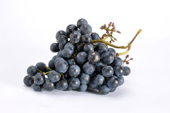 Blue grapes bunch Stock Photo