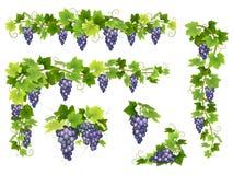 Blue grapes bunch set vector illustration