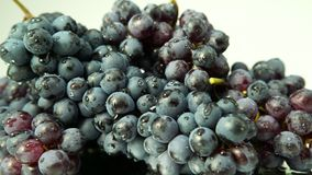 Blue grapes with drops of water stock video