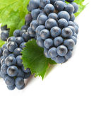 Blue grapes with green leaf Royalty Free Stock Photos