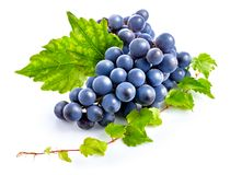 Blue grapes with green leaf healthy eating. Royalty Free Stock Images