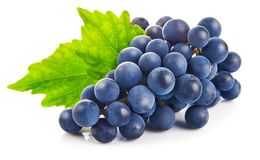 Blue grapes with green leaf healthy eating, on white background. Royalty Free Stock Image