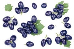 Blue grapes isolated on the white background. Top view. Flat lay pattern royalty free stock photography