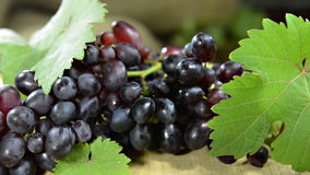 Blue Grapes (not loopable) Stock Photos