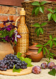 Blue grapes and ripe plums Royalty Free Stock Photography