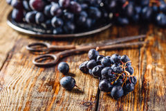 Blue Grapes and Rusty Scissors. Royalty Free Stock Photo
