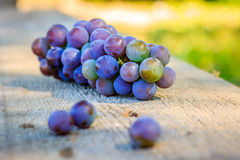Blue grapes Royalty Free Stock Photo