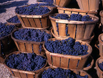 Blue grapes in wedges Royalty Free Stock Photos