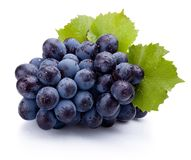 Blue grapes wet with leaves isolated on white background Stock Image
