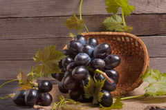 Blue grapes in a wicker basket on wooden table.  stock image