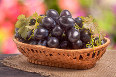 Blue grapes in a wicker basket on wooden table with  blurred background Stock Photo
