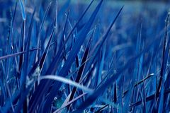 Blue grass. A field of grass turned blue in postprocessing Stock Photography
