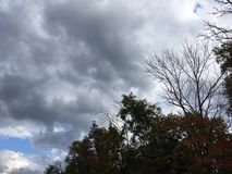 Blue-gray dark cloudy sky. Forest, early autumn. Royalty Free Stock Photo