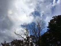 Blue-gray dark cloudy sky. Trees, forest. Stock Photo