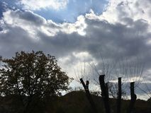 Blue-gray sky, sun through the clouds. Chopped trees. Vladivostok nature in early autumn Royalty Free Stock Photo