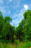 Blue green. Blue sky green forest royalty free stock photography