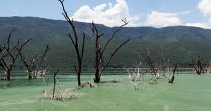 Blue-green Algae, spirulina sp., Food for Flamingoes, this Algae contains pigments that give them their natural pink colour,. Bogoria Lake in Kenya, Real Time stock video footage