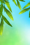 Blue and green background with bamboo. Leaves frame royalty free stock photography