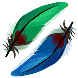 Blue and green bird feather on white background Stock Photos