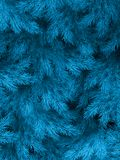 Blue green branches of a fur-tree, spruce or pine with copyspace. EPS 10 royalty free illustration