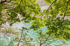 Blue green color of Achensee lake with tree branch growing near. Blue green color of Achensee with tree branch growing near fresh Turquoise water, northern part Royalty Free Stock Photo