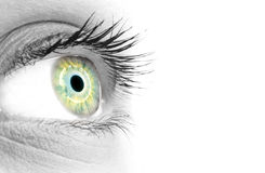 Blue/green eye of a beautiful woman Stock Images