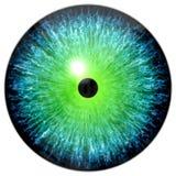 Blue green eye Stock Image