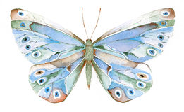 Blue and green fantasy butterf. Watercolor painting of a blue and green fantasy butterfly Stock Photography