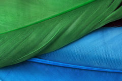Blue and green feathers Stock Photos