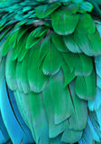 Blue and Green Feathers. Macro photograph of the blue and green feathers of a macaw Stock Image