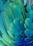 Blue and Green Feathers. Macro photograph of the blue and green feathers of a macaw Royalty Free Stock Image