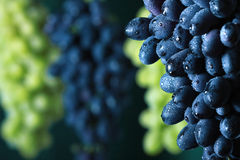 Blue and green grape cluster Royalty Free Stock Images