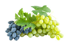 Blue and green grapes Royalty Free Stock Photography