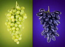 Blue and green grapes on a colored background Stock Photography