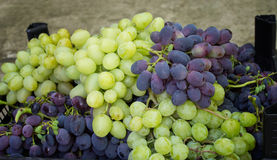 Blue and green grapes in container after the harvest Stock Photography
