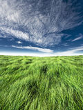 Blue and green horizon. Blue sky with high green grass horizon shot. Suitable for design background. Location: Nanos, Slovenija royalty free stock image