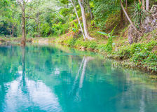 Blue-green  lake and tree Stock Images