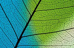 Blue-green Leaf structure Stock Photo