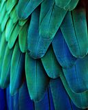 Blue/Green Macaw Feathers. Macro photo of blue/green macaw feathers Royalty Free Stock Photo