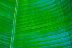 Blue and green palm leaf Royalty Free Stock Image