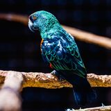 Blue and green parrot Royalty Free Stock Images