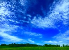 Blue And Green. Blue sky contrasting with pine trees and grass Stock Photography