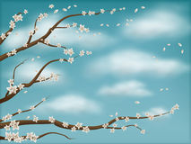 blue green spring blossom background Stock Images