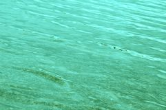 Blue-Green Water Gently Rippling. A sea of blue-green water gently rippling royalty free stock images